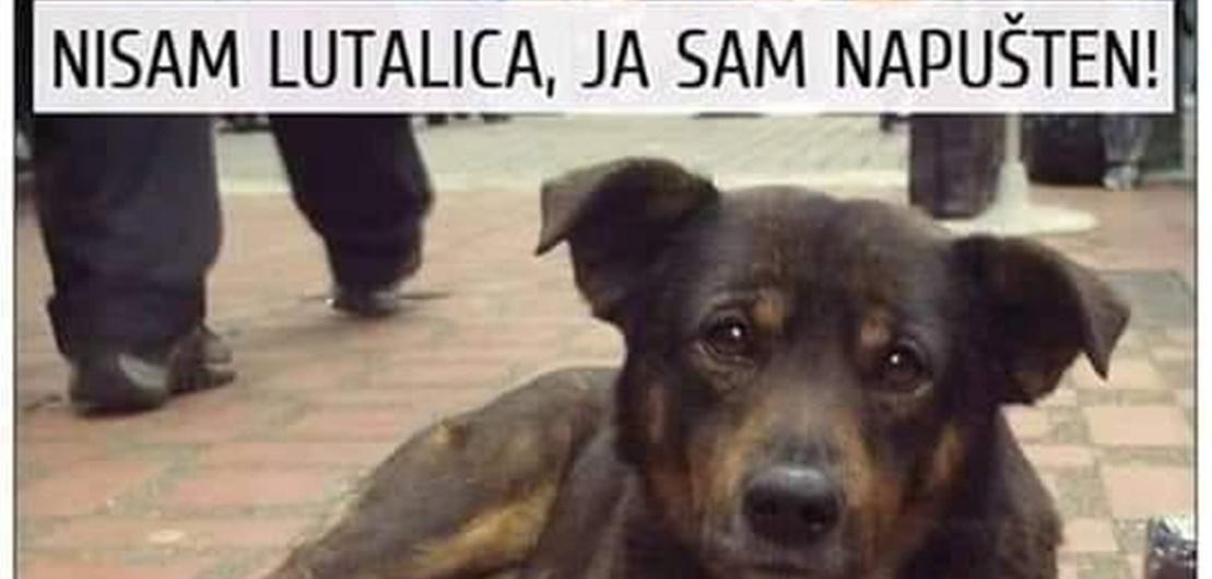 Pomoć životinjama